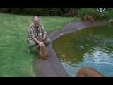 Планета собак. Родезийский риджбек