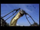 Самая большая змея в мире.
